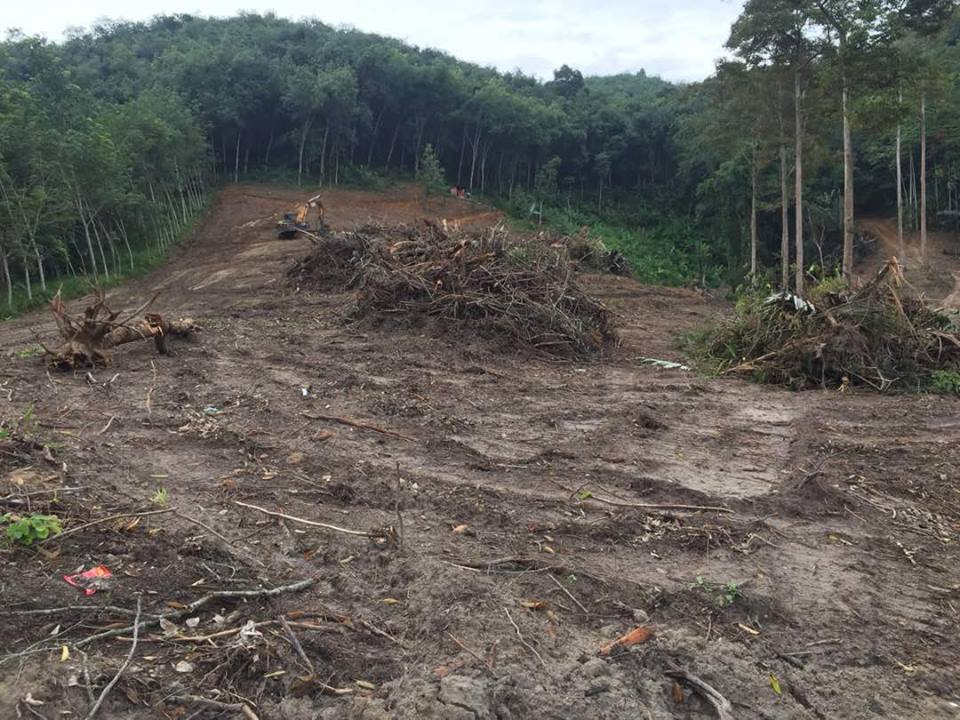 The expansion of the Sudcam rubber plantation, experts argue, has come at the expense of forest.