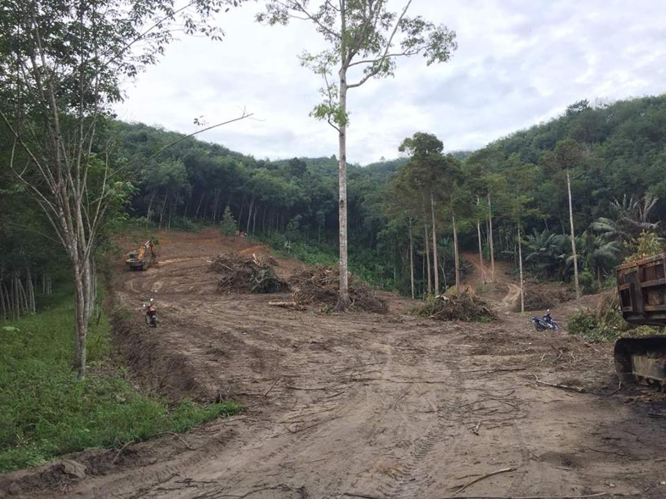 """The rubber plantation project that has displaced forest people and now threatens wildlife is a sheer disaster,"" Njamnshi said."
