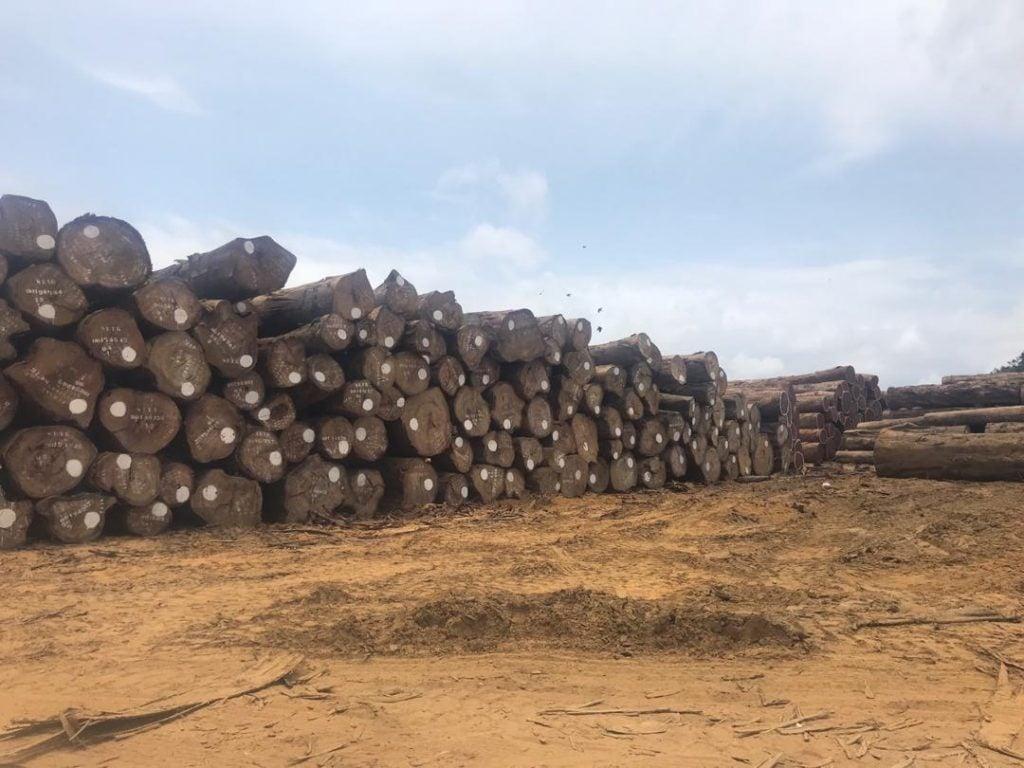 L'Afrique Centrale a totalisé 42% des exportations de bois sous forme de grume de l'Afrique vers la Chine entre janvier 2014 et mars 2018. Photo/EIA
