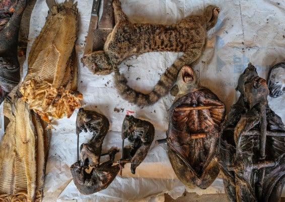 Le commerce de viande de brousse a augmenté en raison de la croissance démographique à Yangambi et dans les villages voisins. CIFOR/Axel Fassio