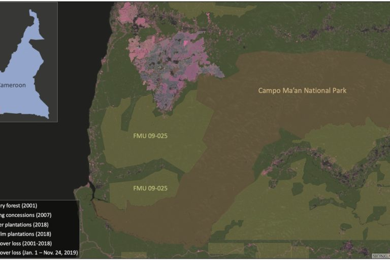 Map of FMU 09-025, the national park, and existing plantations. Image by Mongabay via Global Forest Watch.