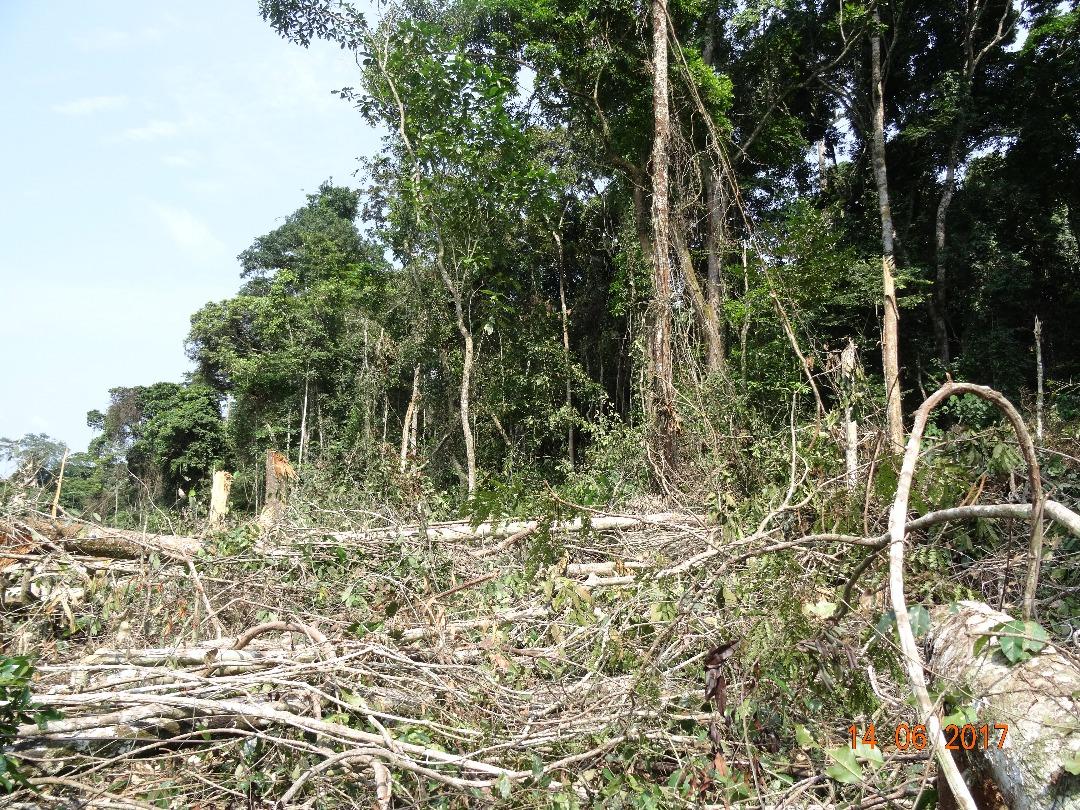 Espaces de forêt détruites par SUDCAM