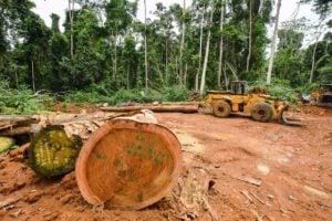 Forêt rasée par SUDCAM